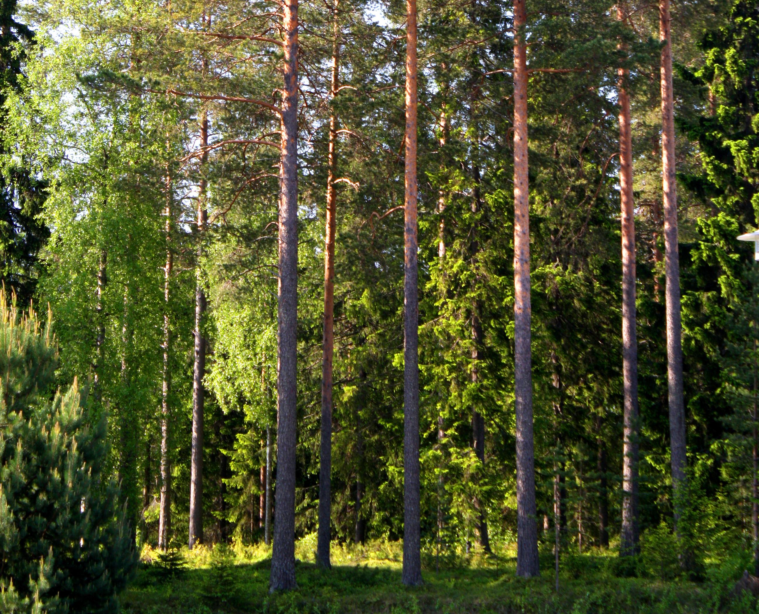 Metsä 001