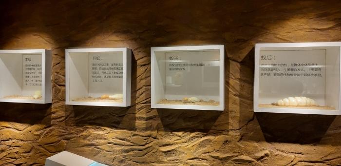 Daquan-padon yhteyteen on rakennettu termiittinäyttely, jossa on esillä muun muassa eri kehittymisvaiheissa olevia termiittejä.