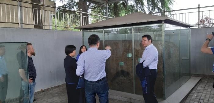 Daqua-padosta kaivettu termiittien pesä, joka on laitettu lasivitriiniin nähtäville.