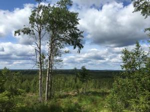 Maisemakuva metsäaukealta. Kuvassa lehti- ja havupuita.