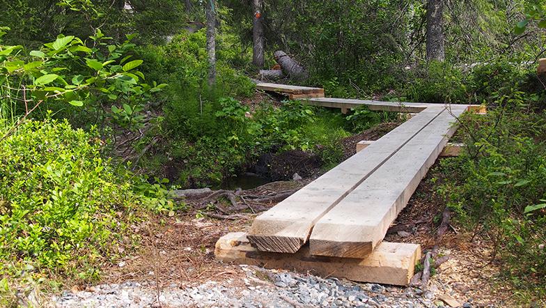 Pitkospuita on rakennettu metsäreitille.