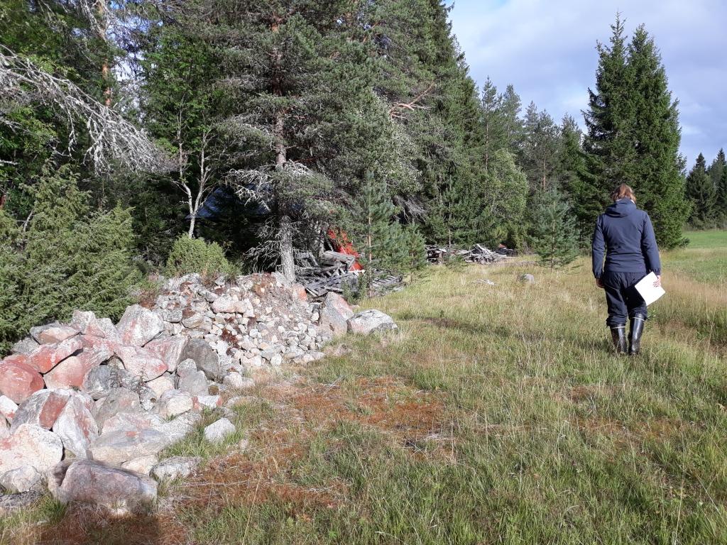 Ihminen kävelee pitkin peltoaukea lehtiö kädessään. Aukeaa reunustaa kiviaita ja havumetsä.