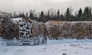 Rekka ajaa puukuormassa lastausalueella talvella.