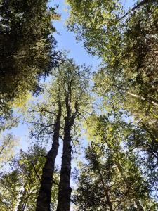 Puut kohoavat kohti taivasta.